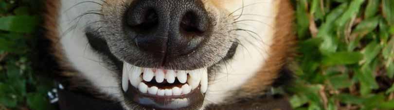letsel hondenbeet
